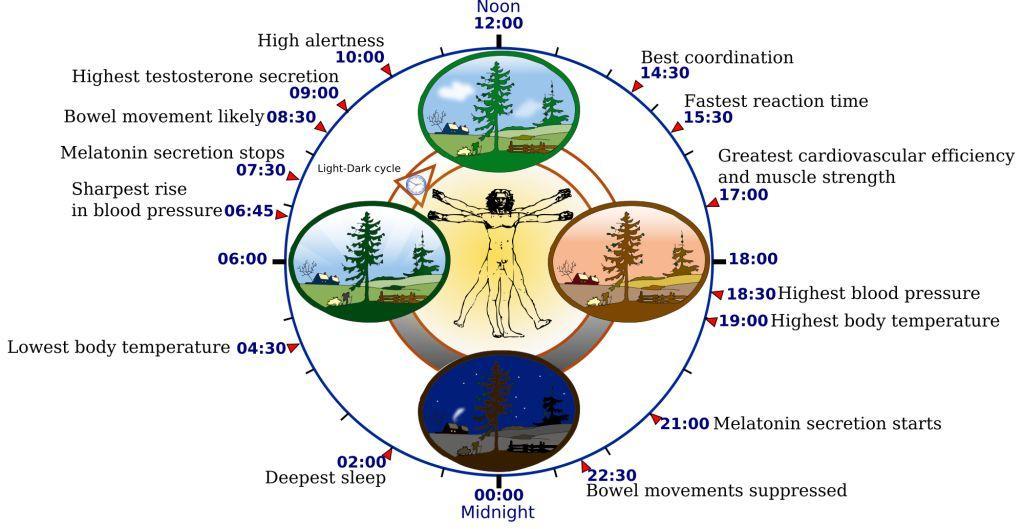 News: Wie wichtig ist unser Schlafrhythmus?