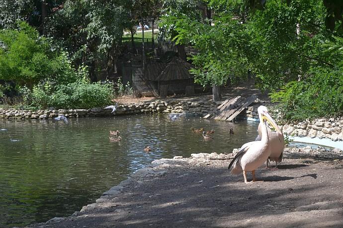 Зоопарк в Варне