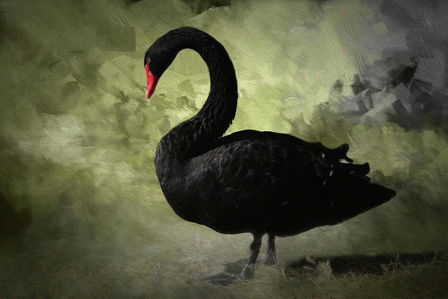 black swan critique