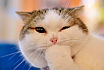 Pokerowe Gify - Więcej Kotów!
