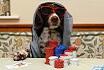 Pokerowe GIFy - edycja piesowa