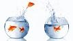 Paxis erobert neue Fischgründe bei Unibet